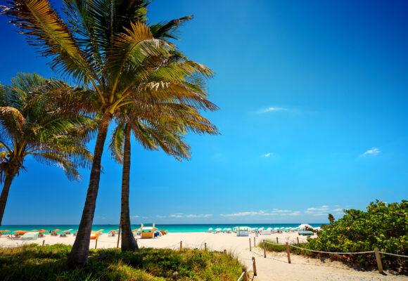 USA Miami Beach Palme