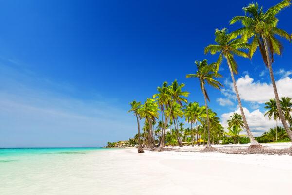 Dom Rep Punta Cana Palmen