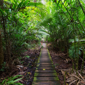Borneo Rundreise: Routen, Transportmittel & Kosten