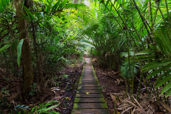 Malaysia Borneo Dschungel