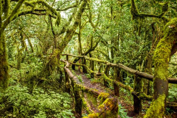 Spanien Kanaren La Gomera Garajonay Nationalpark