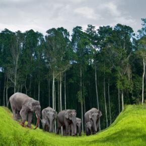 Die Elefanteninsel Thailands: 15 Tage auf Koh Chang mit TOP Unterkunft & Flug nur 411€