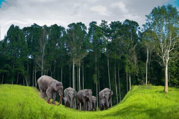 Thailand Koh Chang Elefanten