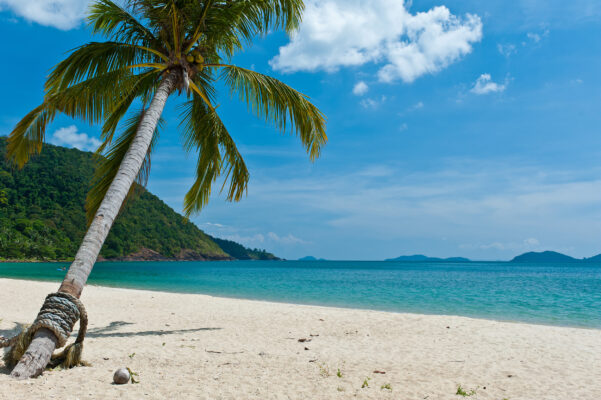 Thailand Koh Chang Kokosnusspalme