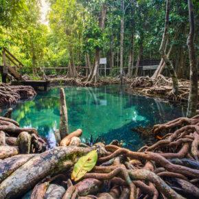 Thailand Krabi Mangrovenwald