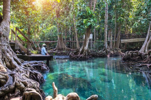 Thailand Krabi Wald