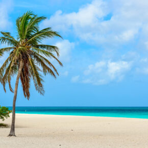 Frühbucher Aruba: 8 Tage mit guter Unterkunft in Strandnähe & Flug für 519€