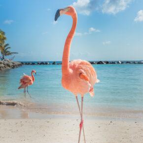 Ab nach Aruba: 9 Tage mit 3* Hotel, Flug & Transfer nur 499€