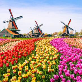 Zum Tulpenfest in Holland: 2 Tage Den Haag im 3* Hotel inkl. Frühstück & Keukenhof nur 54€