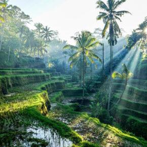 Indonesien Bali Reisterrassen