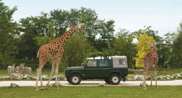 Parco Natura Viva Safari