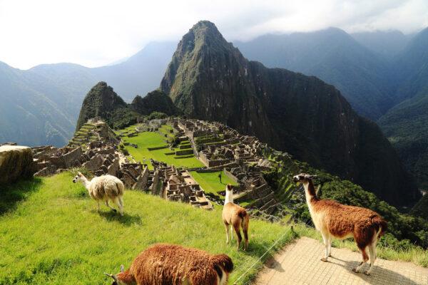 Peru Machu Pichu Lamas