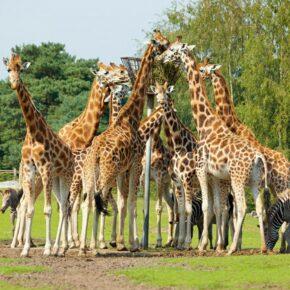Niederlande: 4 Tage Safaripark in Brabant mit Chalet & FunCard nur 32€