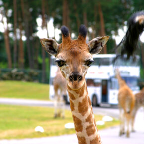 Serengeti Park: 3 Tage mit 3* Lodge, Frühstück, Bustour & Eintritt ab 109€