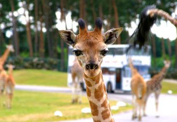 Serengeti-Park: 2 Tage Lüneburger Heide im 3* Hotel mit Frühstück & Eintritt ab 72€