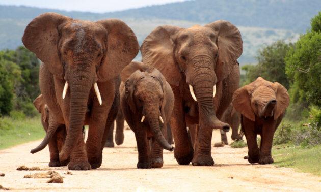 Südafrika Addo Elephant Nationalpark