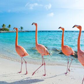 2021 ab in die Karibik: Hin- & Rückflüge nach Aruba inkl. Gepäck nur 448€