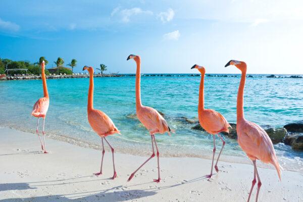 Aruba Tipps