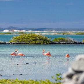 9 Tage Karibik-Urlaub auf Bonaire im Sommer mit 4* Apartment, Flug & Transfer für 623€