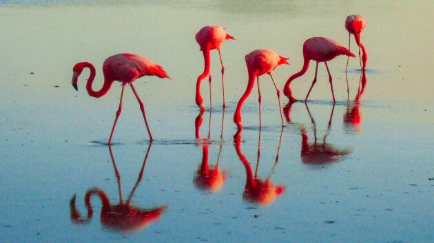 Bonaire Flamingos Abends