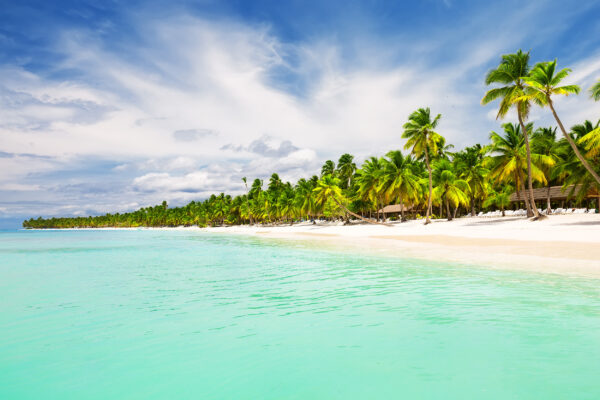DomRep Punta Cana Kokosnuss Palmen