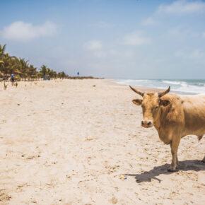 Im Sommer nach Afrika: 13 Tage Gambia im guten 5* Strandhotel mit All Inclusive, Flug, Transfer & Zug für 695€