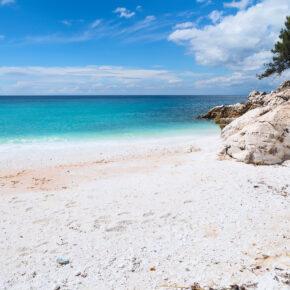 Griechenland Thassos Marble Beach Nadelbaum