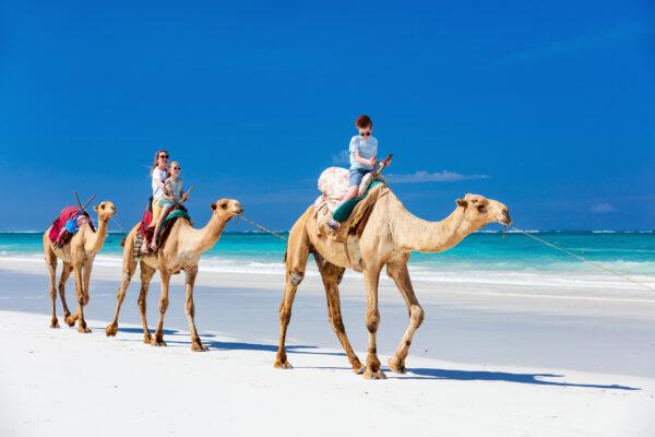 Kamel Reiten Familie