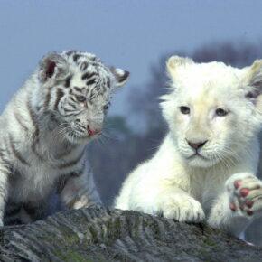 Safari Park Stukenbrock Babies