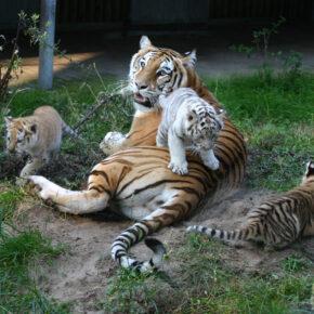 Wochenende: Eintritt in den Safaripark Schloss Holte-Stukenbrock mit Unterkunft nur 40€