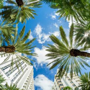 USA Miami Beach Palmen