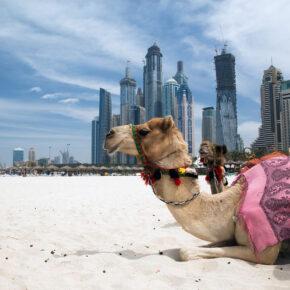 Höchstes Hotel der Welt: 7 Tage im 4* Hotel in Dubai mit Frühstück, Flug, Transfer & Zug nur 454€