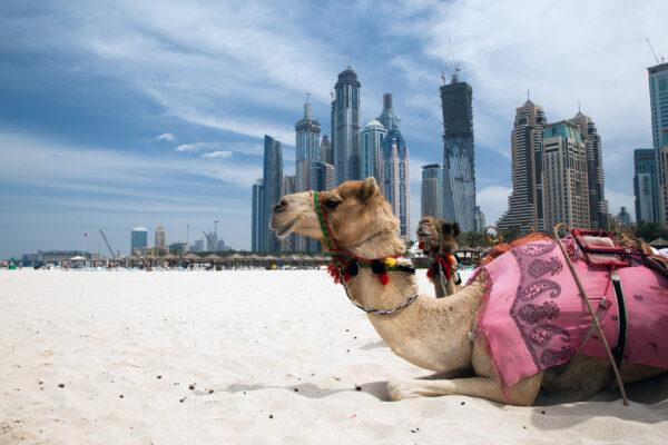 VAE Dubai Kamel Stadthintergrund