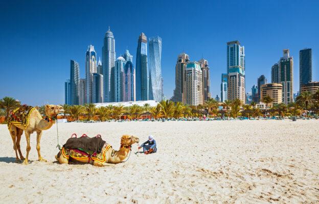 VAE Dubai Kamele Jumeirah Strand