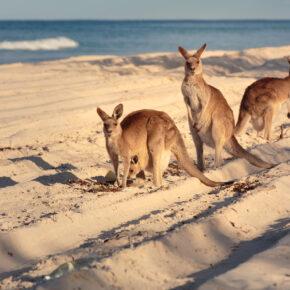 Australien Brisbane Bribi beach