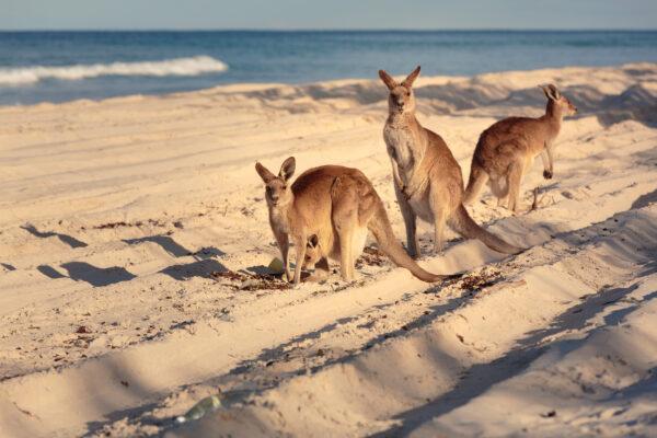 Australien Tipps