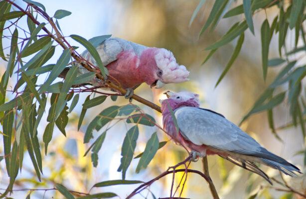 Australien Kakadu
