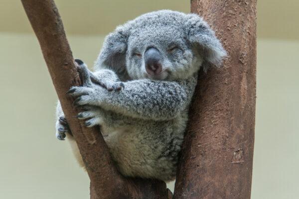 Google Bilder Süße Tiere Malvorlagen Und Ausmalbilder