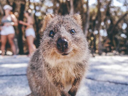 Top 5 der süßesten Tiere Australiens