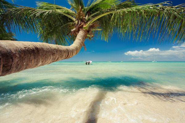 Karibik Palme über Wasser
