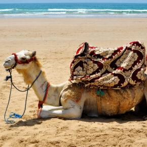 Lastminute: 7 Tage Marokko im 4.5* Hotel mit All Inclusive, Flug, Transfer & Zug nur 187€
