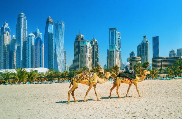 VAE Dubai Jumeirah Beach Kamele