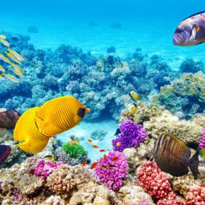 Ägypten 2021: 7 Tage Hurghada im 4* Hotel mit All Inclusive, Flug & Transfer nur 307€