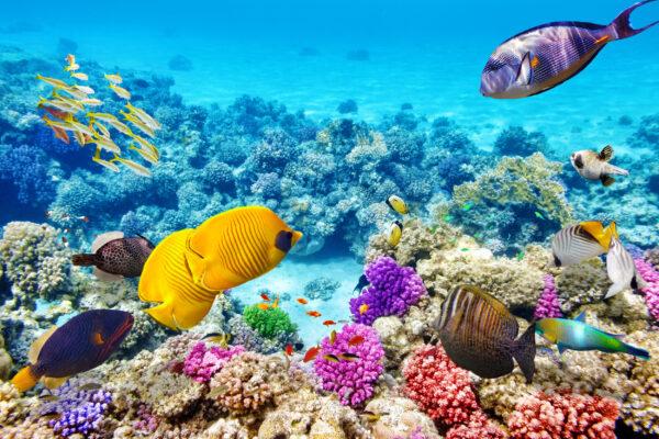 Ägypten Schnorcheln Fische