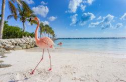 Karibik: 9 Tage Aruba mit TOP 3* Hotel, Flug & Transfer nur 599€