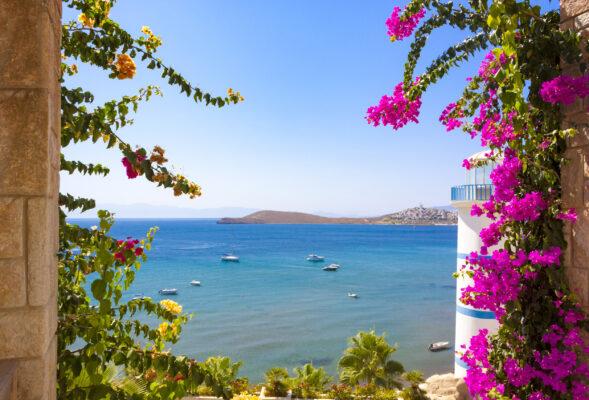 Türkei Bodrum Blumen