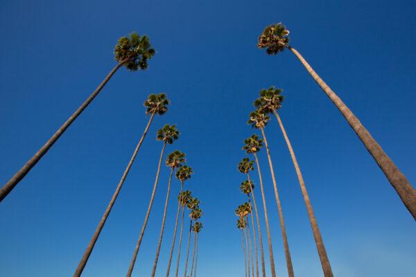 USA Los Angeles Palmenallee