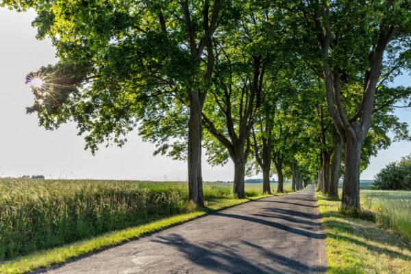 Deutschland Baum Allee