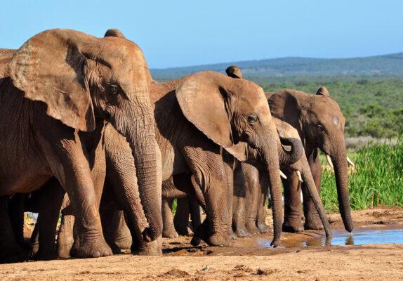 Urlaub zu Hause: Safari