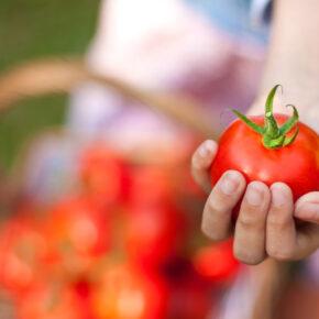 La Tomatina Fest: Die größte Tomatenschlacht der Welt